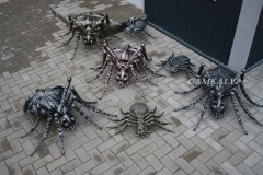 Zirnekļu ģimene nr. 25